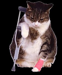 Kat met een gebroken poot in het gips.